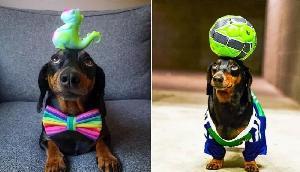 ये है दुनिया का सबसे अनोखा कुत्ता, हुनर देख दंग रह जाएंगे आप