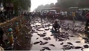 यहां अचानक से सड़क पर तैरने लगी मछलियां, लोग थैले भरकर ले जा रहे