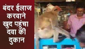 घायल बंदर खुद का ईलाज करवाने पहुंचा दवा की दुकान, हकीकत जानकर भर आएंगी आंखे