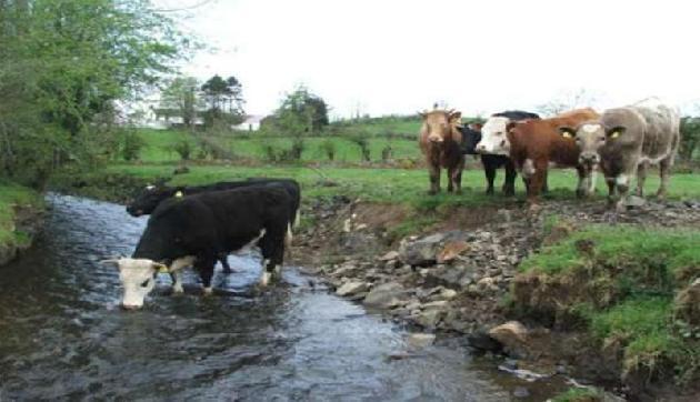इस नदी में 750 टन वियाग्रा की गोलियां, पानी पीते ही पशुओं में हुआ ऐसा चौकाने वाला बदलाव