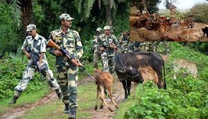 भारत के इस राज्य से 10000 गायें चुराकर ले जा रहे थे बांग्लादेशी मुस्लिम, फिर BSF ने किया ऐसा हाल