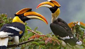 यह पक्षी मारने वाले की पत्नी की हो जाती है मौत! खूबियां जानकर रह जाएंगे दंग
