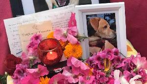इस व्यक्ति ने न्यूजीलैंड से बिहार आकर किया कुत्ते का पिंडदान, गंगा में विसर्जित की अस्थियां