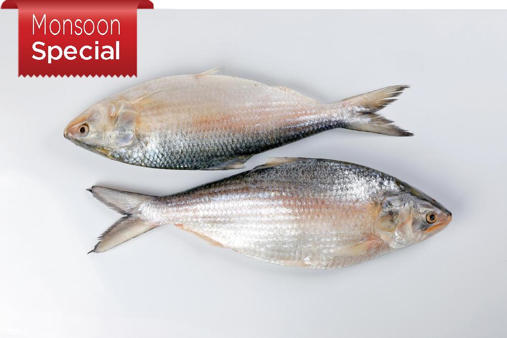 Hilsa Fish ( 900-1kg )