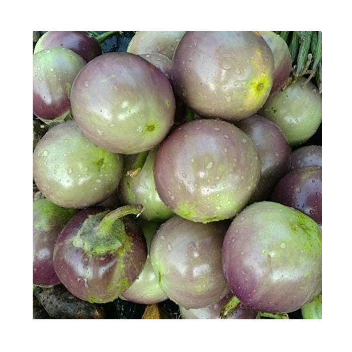 Brinjal / Green Purple (Payra Tuni)
