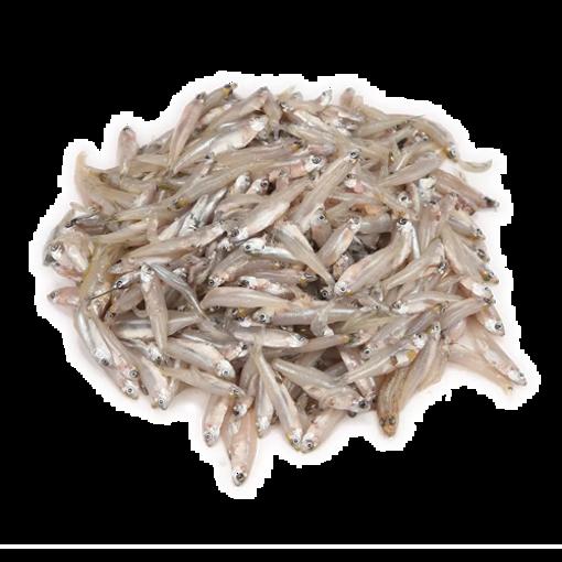 Fresh Kachki Fish