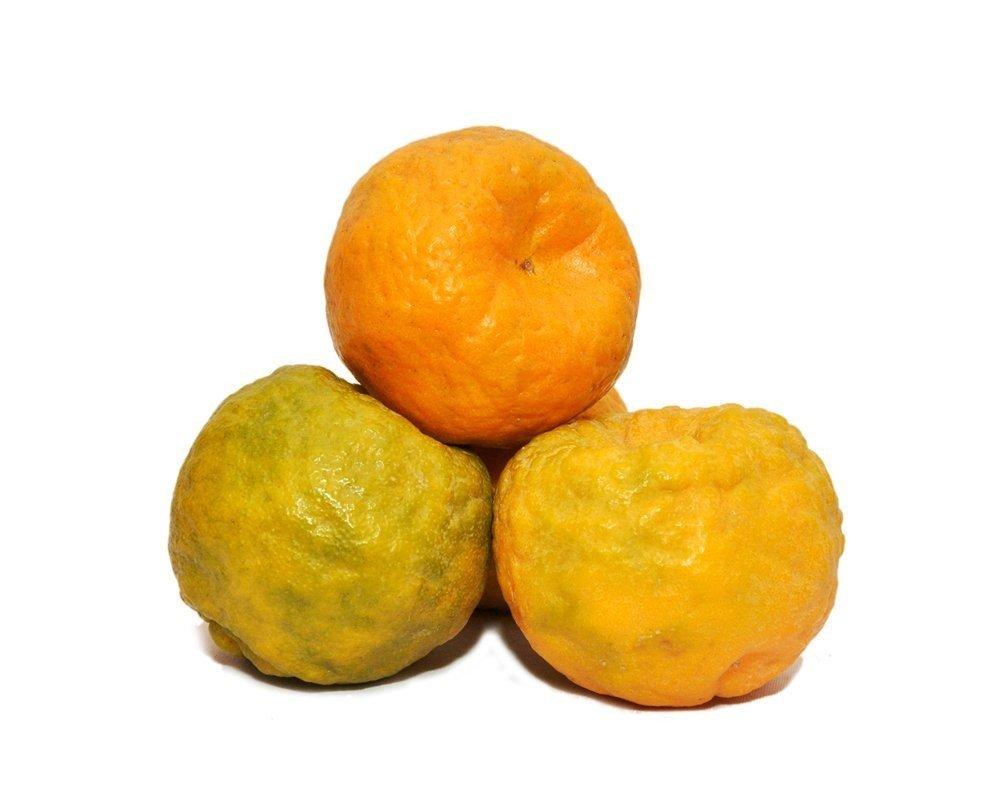 Orange Nagpur (big)