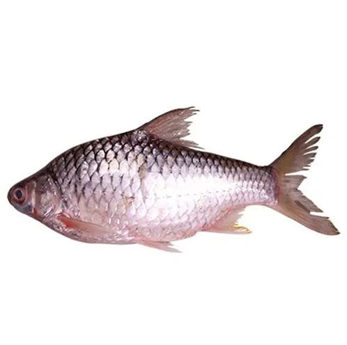 Shorputi (3-4 Pc) Per Kg