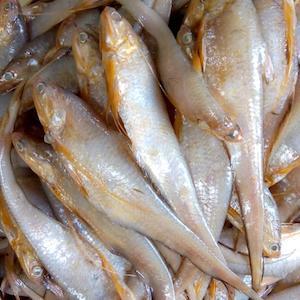 Amodi Fish
