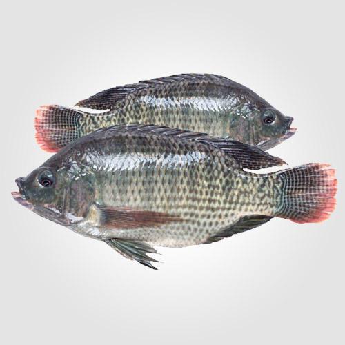 Telapia Fish (8-12Pc/Kg)
