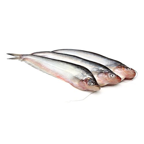 Pabda Fish ( 20Pcs - 25Pcs) Per Kg