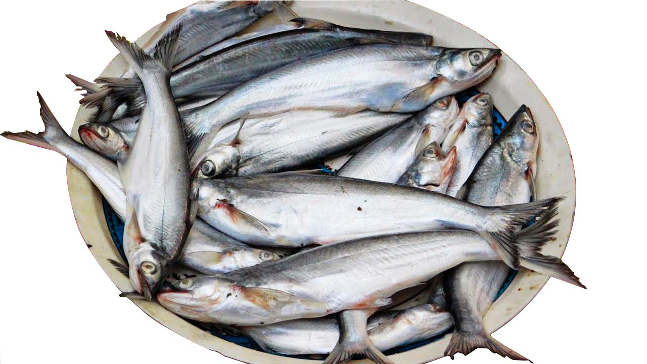 Bacha Fish (10 Pc Per Kg)