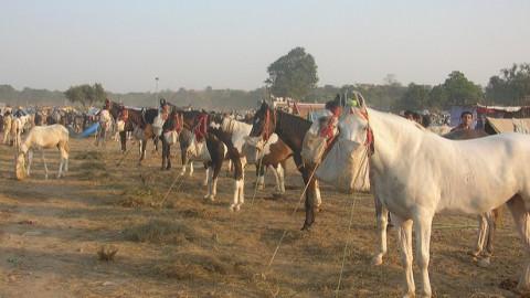 Image result for Bateshwar Cattle Fair