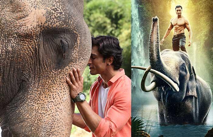 बच्चों के लिए बनाई गई फिल्मो की कमी पूरी करेगी फिल्म 'जंगली'