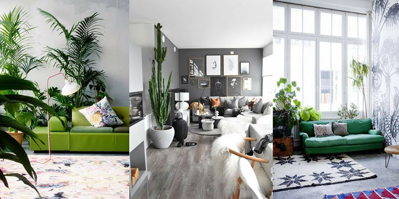 Ways To Decorate Your Interiors with Gorgeous Plants