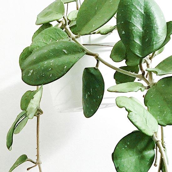House Plants Eliminate Stress