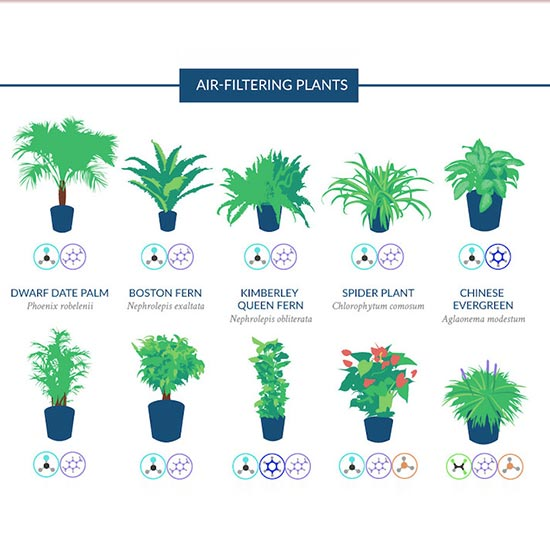 House Plants Improve The Quality of Air