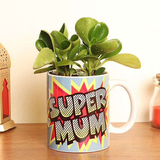 A Mothers Day Plant