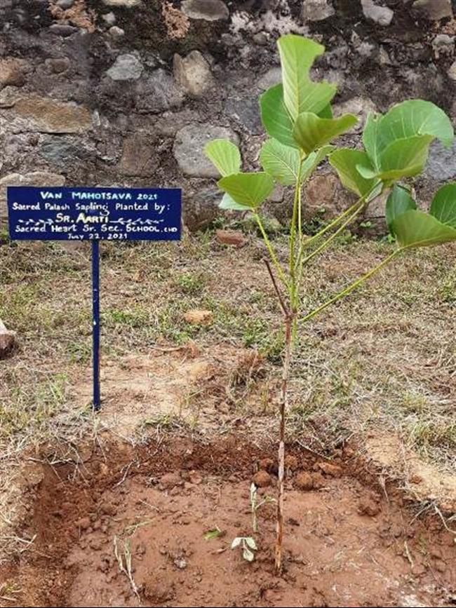 Van Mahotsav- the tree planting festival