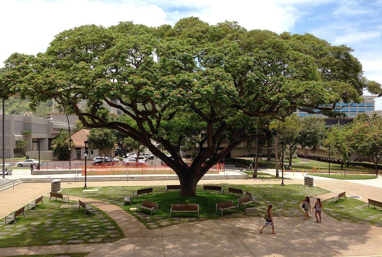 University of Hawaii Manoa Acceptance Rate