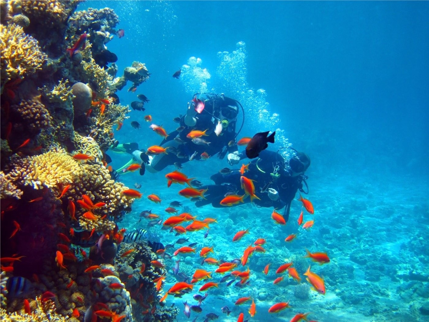 Scuba Diving In Sri Lanka