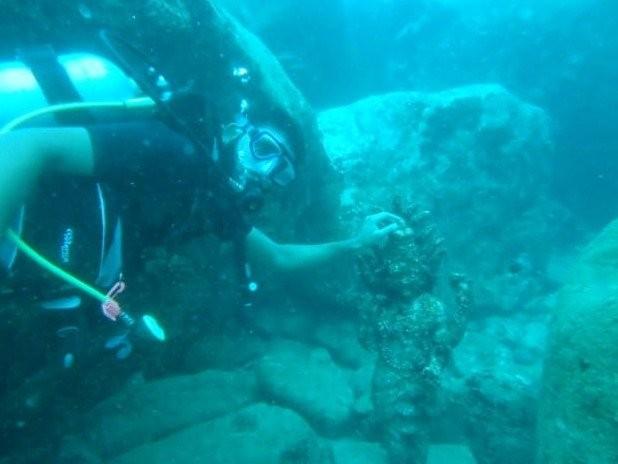 Snorkeling Tours Pigeon Island,tricomalee, Sri Lanka in Trincomalee