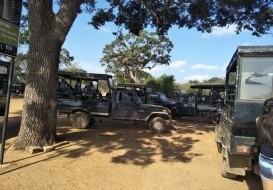Minneriya Safari