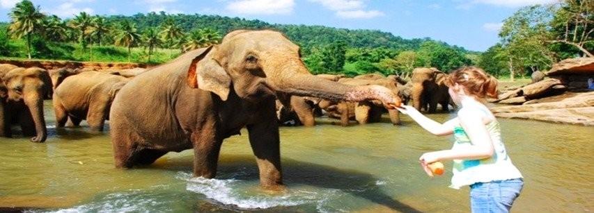 9 Nights & 10 Days Sri Lanka in Kelaniya