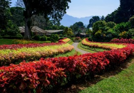 The Royal Botanical Gardens Peradeniya