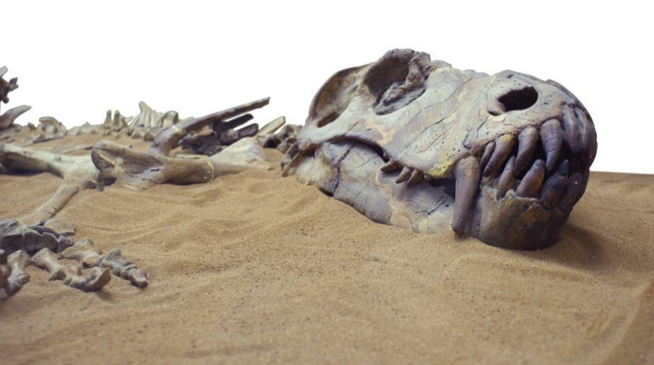 Dating dinosaur bones