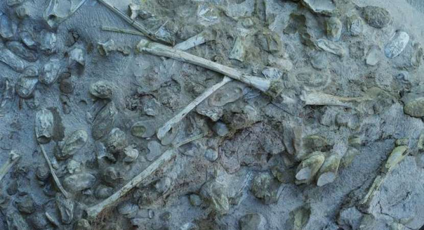 Paleontologists discover 300 fossilised pterosaur eggs and skeletons found in China