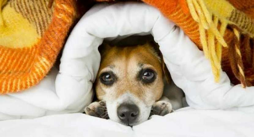 Top 10 Winter Care Tips For Your Dog