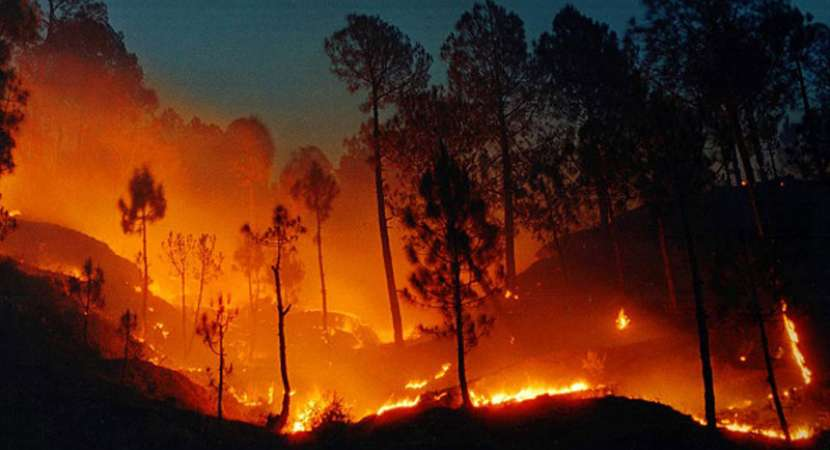 Operation on to rescue trekkers in TN forest fire