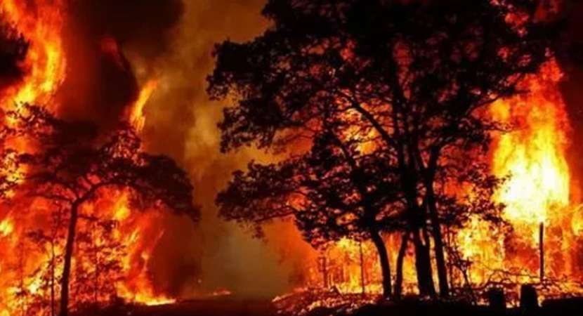 20 students trapped in Kurangani forest fire