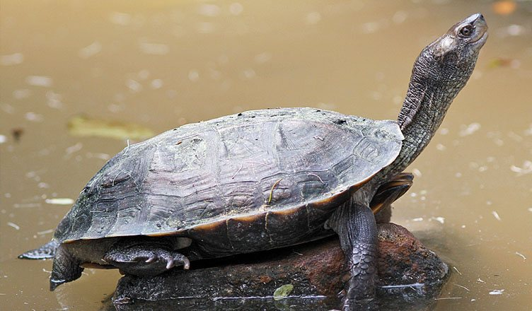 Turtle Wildlife Sanctuary