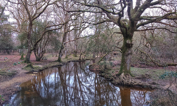 A stream in the New Forest