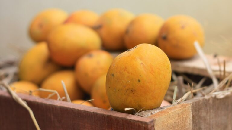 The Story of Alphonso Mangoes