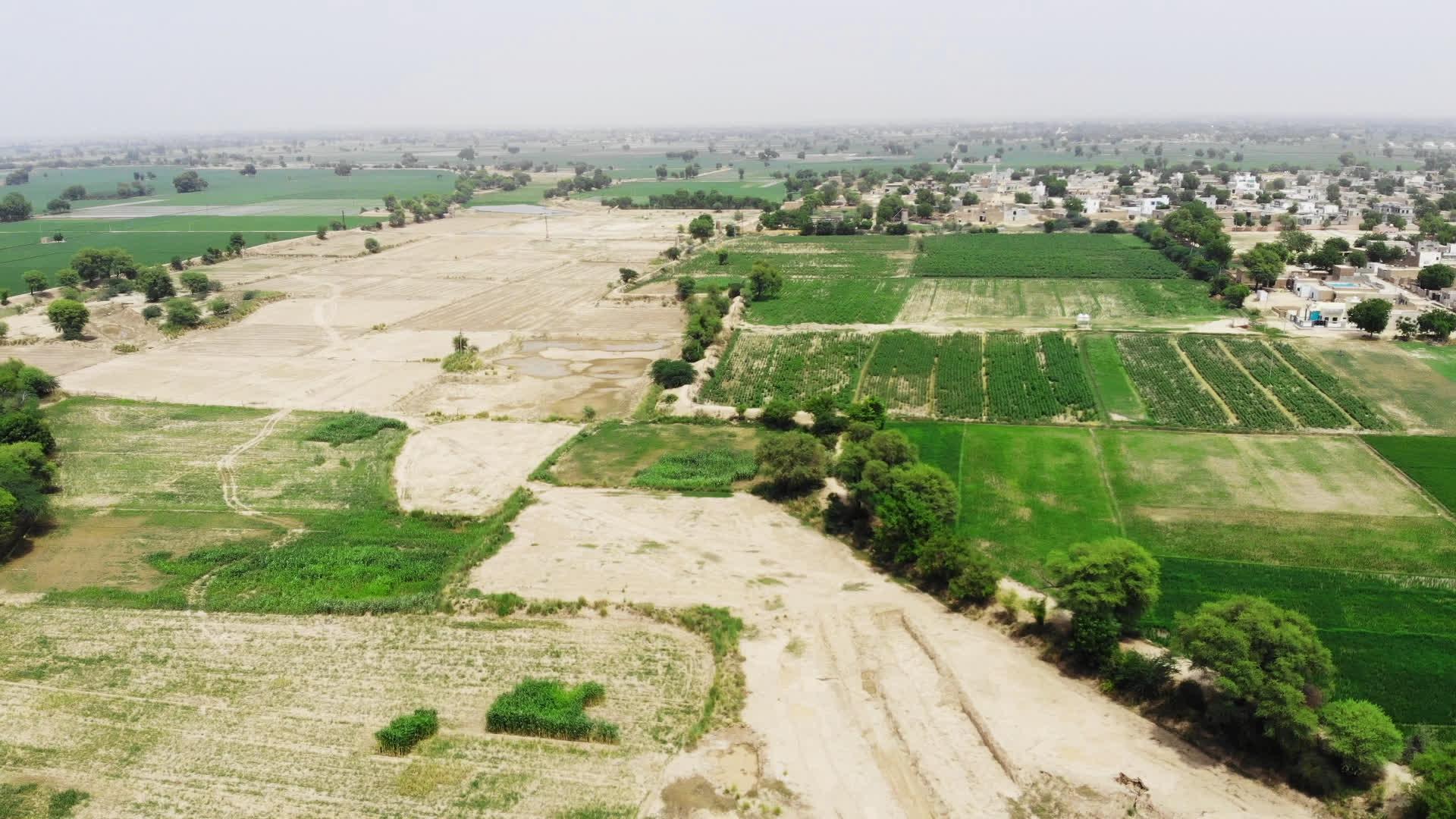 Sri Ganganagar and why Paddy Grows in a Desert!