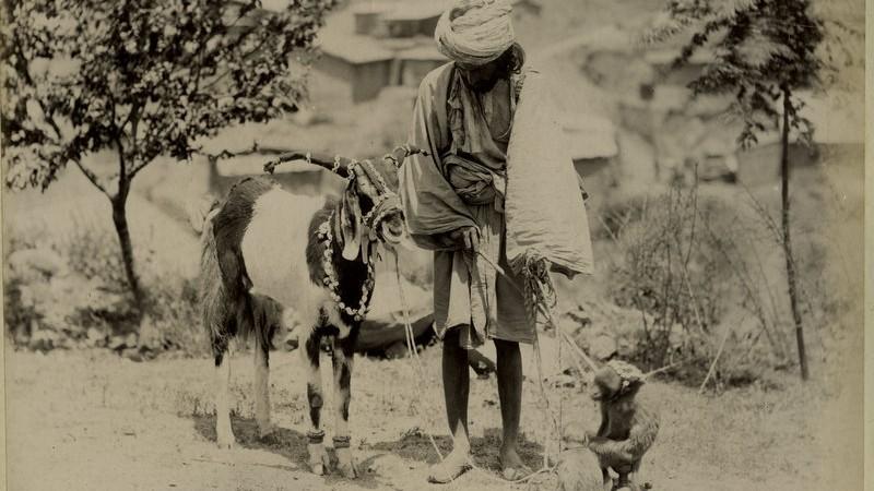 The Madaris of India