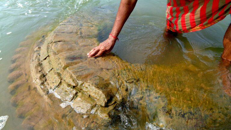 Temple Rises from Odisha's Mahanadi River