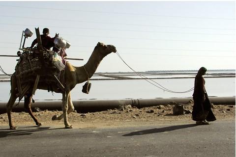Rabari nomads