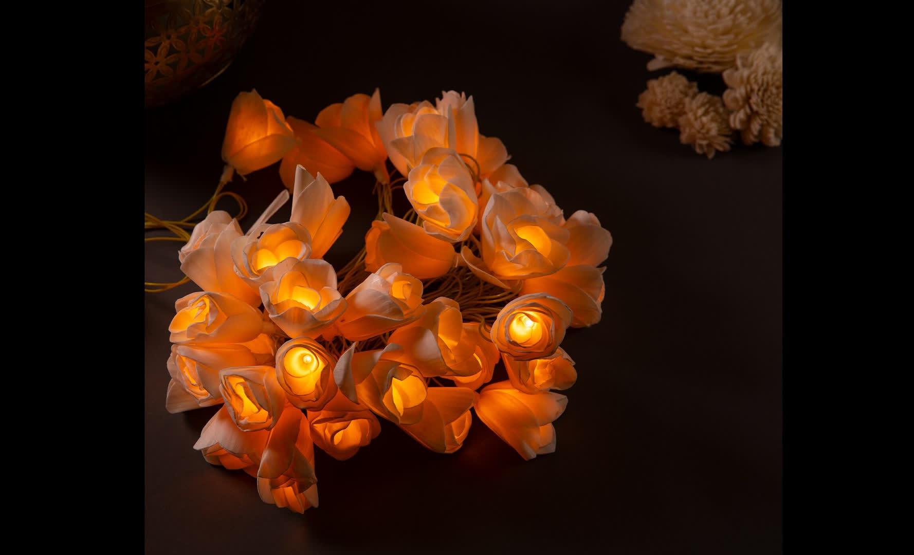 Shola lights | Peepul Tree