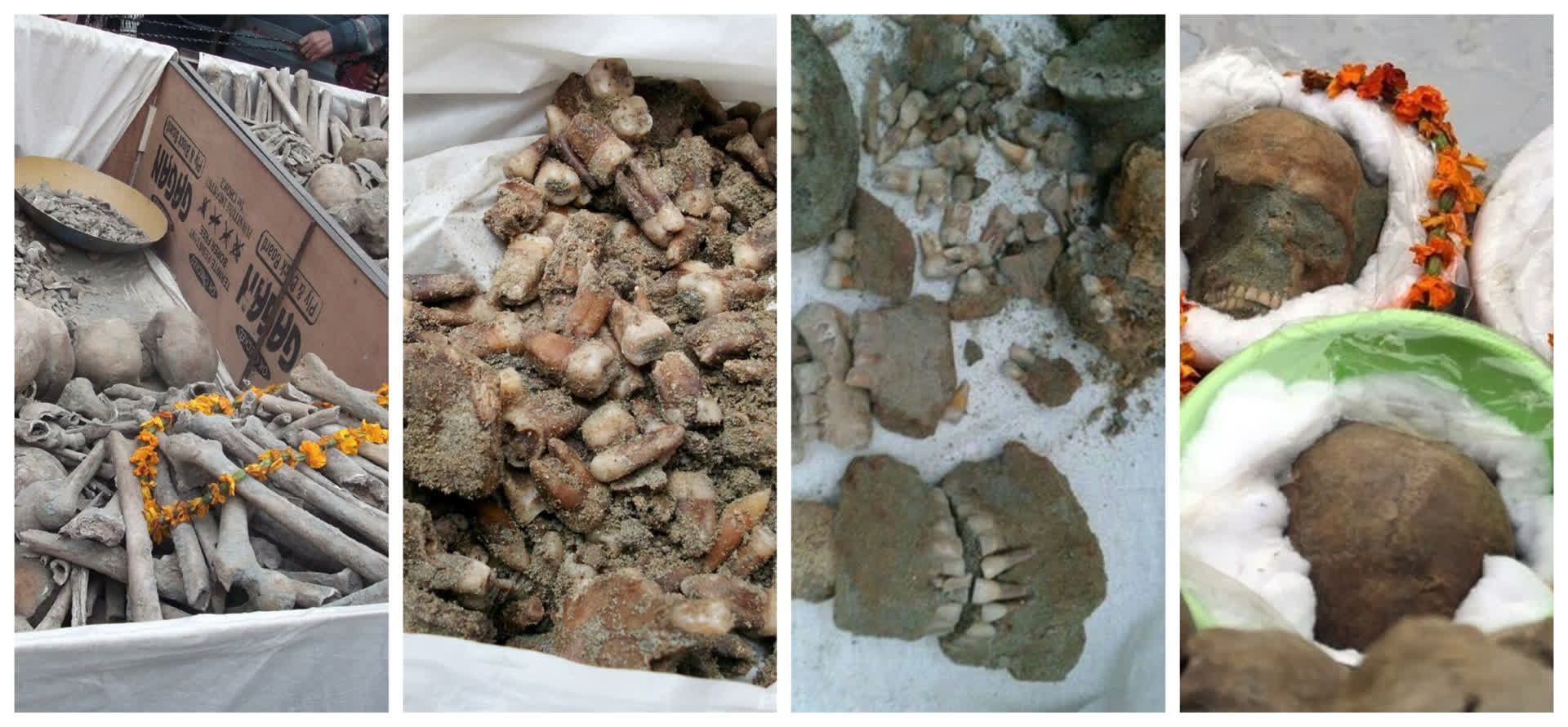 Skeletal remains found from the well