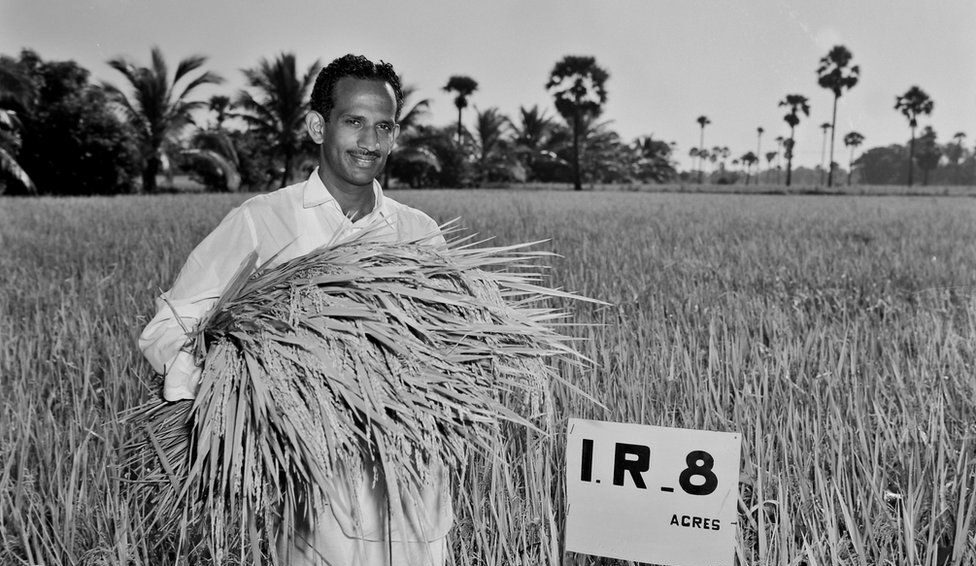 India's Cup of Rice Runneth Over