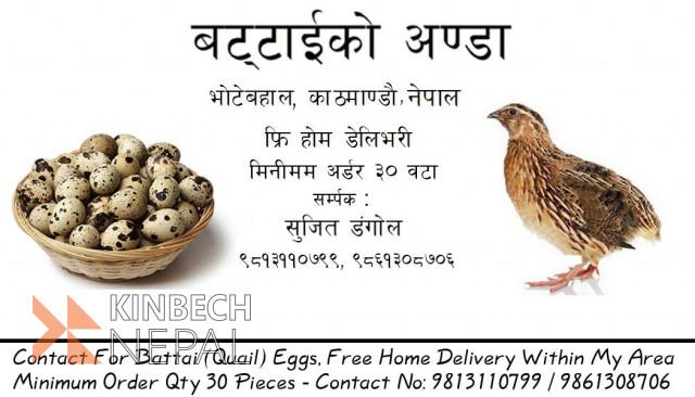 Battai Eggs | www.kinbechnepal.com