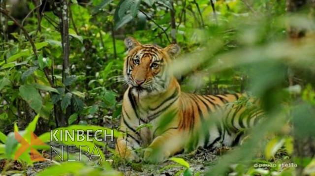 Chitwan National Park Package | www.kinbechnepal.com
