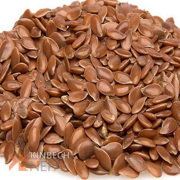 Flax Seed | www.kinbechnepal.com