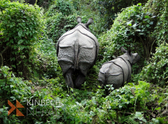 Best of Nepal Tour 15 days | www.kinbechnepal.com