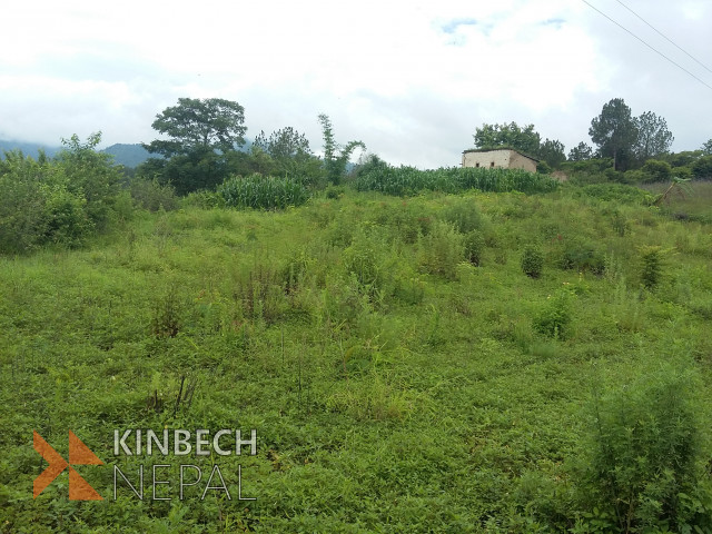 25 Roponi Land in Daxin Kali For Sale | www.kinbechnepal.com