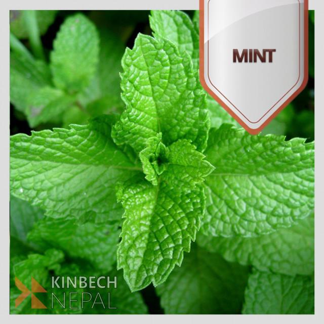 Mint Dry Leaves | www.kinbechnepal.com